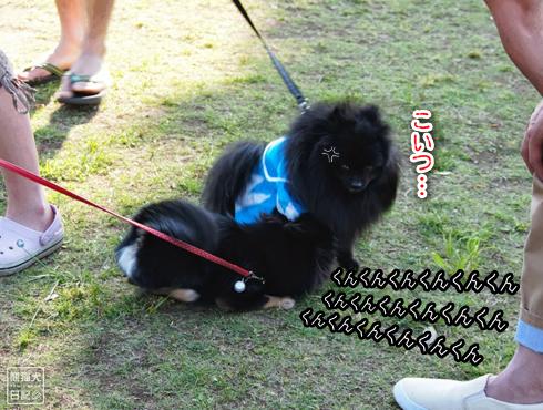 20140611_真熊VS菩提9
