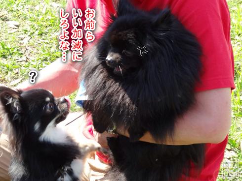 20140611_真熊VS菩提8