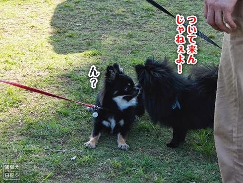20140611_真熊VS菩提15