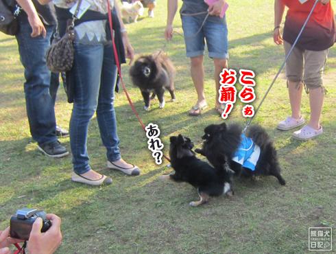 20140611_真熊VS菩提14