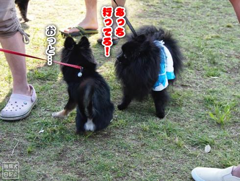 20140611_真熊VS菩提16