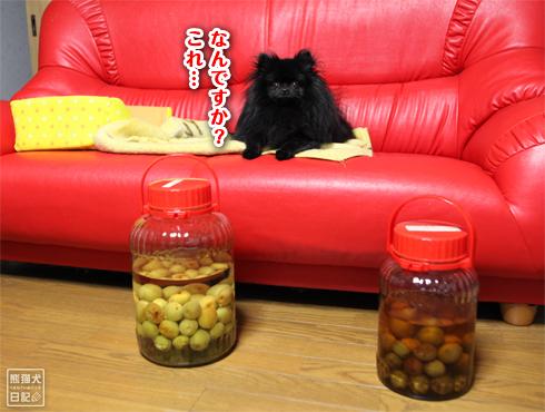 20140618_梅酒5