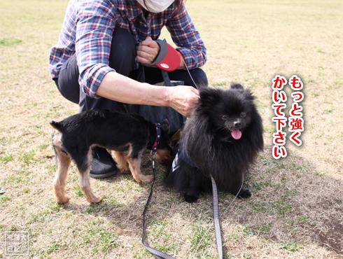 20140619_岸根公園9
