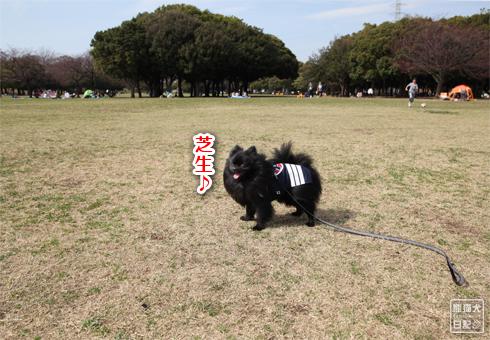 20140619_岸根公園6