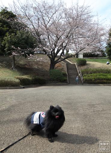 20140621_岸根公園5