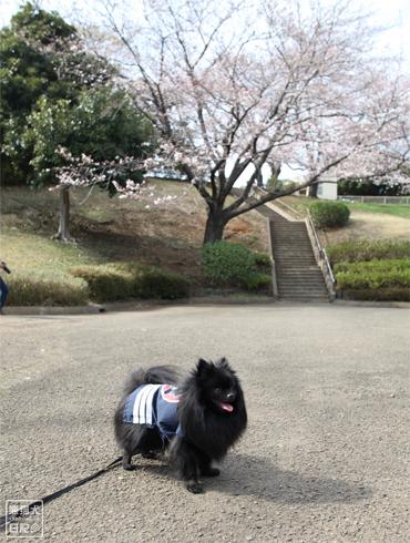 20140621_岸根公園3