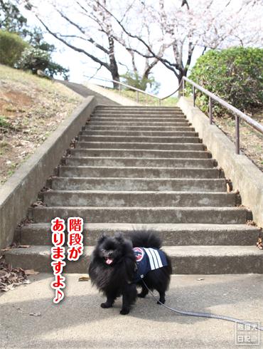 20140621_岸根公園6
