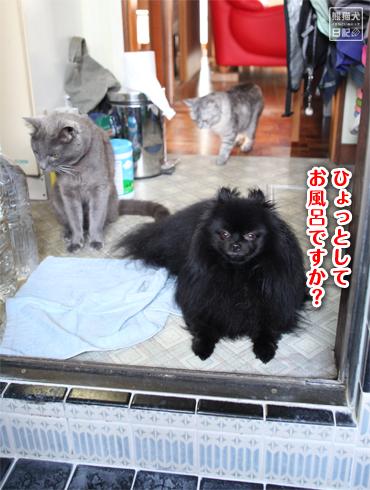 20140803_お風呂4