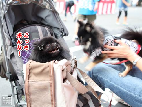 20140804_夏祭り12