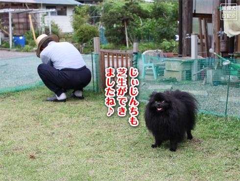 20140815_千葉の両親宅10