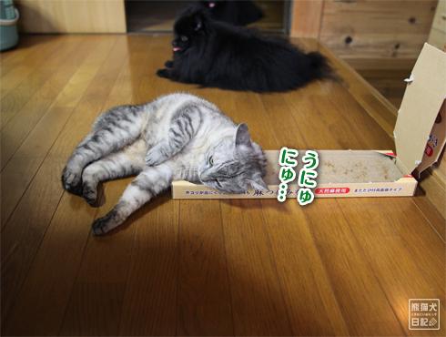 20140817_猫にマタタビ5