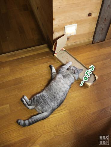 20140817_猫にマタタビ4