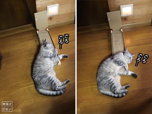 20140817_猫にマタタビ3