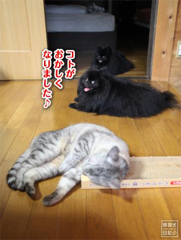20140817_猫にマタタビ6