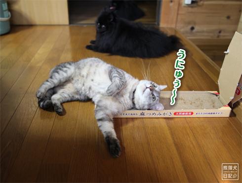20140817_猫にマタタビ7