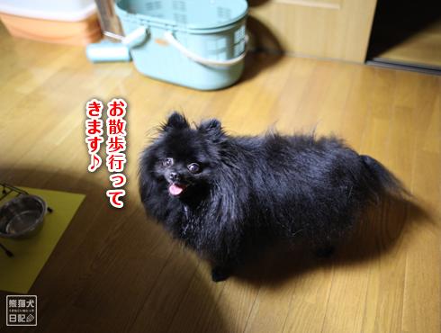20140818_忠犬真熊1