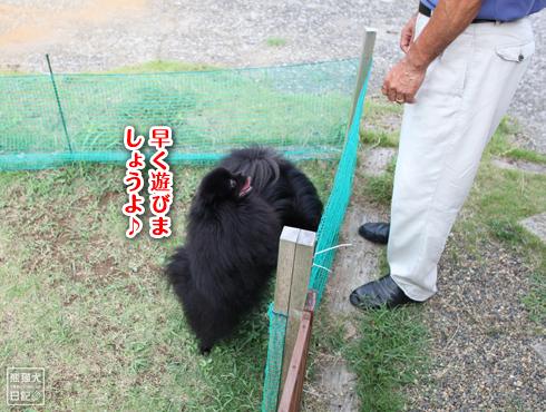 20140820_ほぼ熊5
