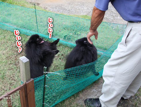 20140820_ほぼ熊3