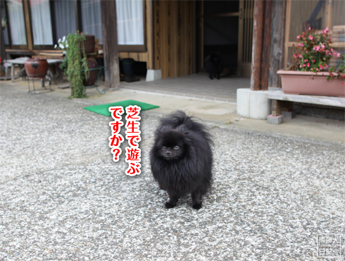 20140820_ほぼ熊1
