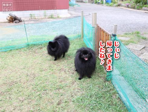 20140820_ほぼ熊8