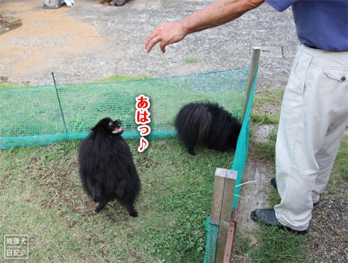 20140820_ほぼ熊7
