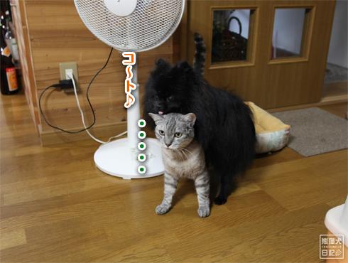 20140822_耐える猫7