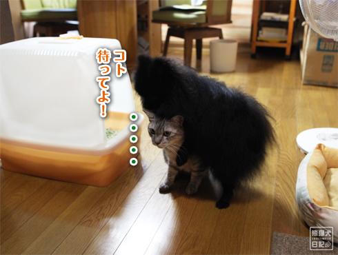 20140822_耐える猫5