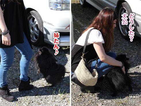 20140826_再会ミス熊猫犬日記8