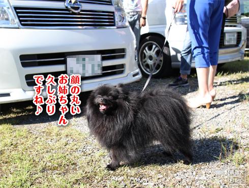 20140826_再会ミス熊猫犬日記11
