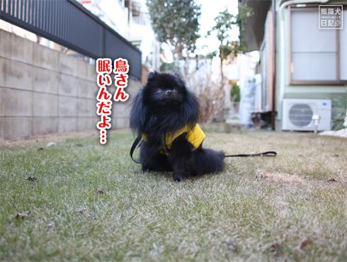 20140830_芝生13