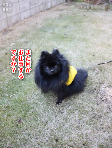 20140830_芝生12