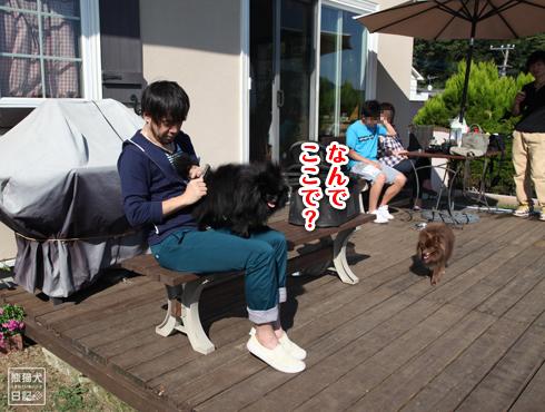 20140924_秋晴れドッグラン6