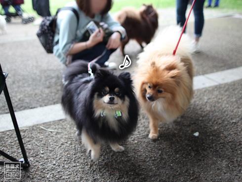20150522_いろんな犬たち11