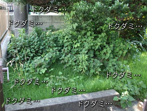 20150713_芝生メンテナンス4