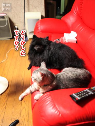 20150811_ぐうたら猫13