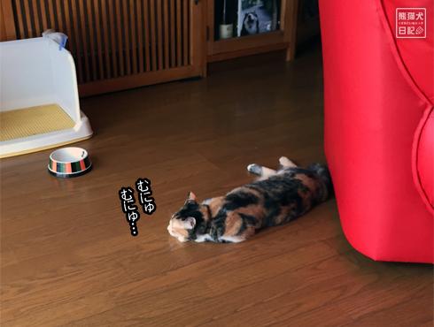 20150811_ぐうたら猫11