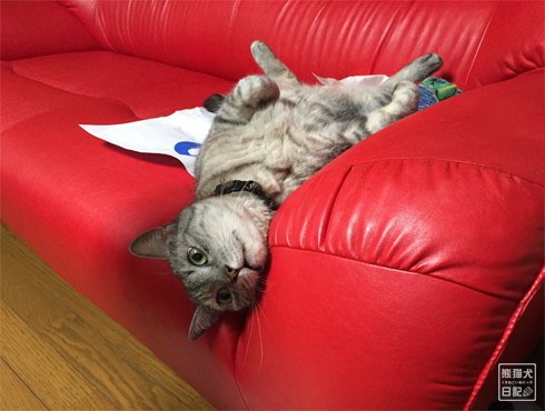 20150811_ぐうたら猫9