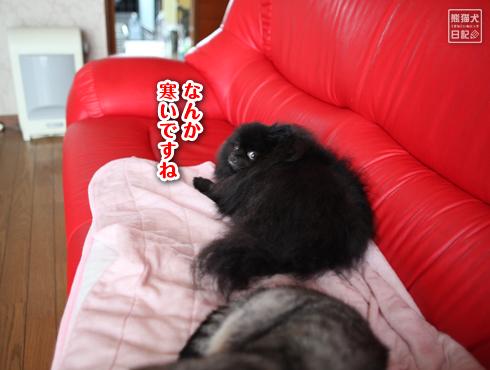 20150829_真熊2