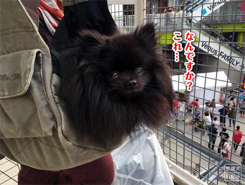 20151008_お台場6