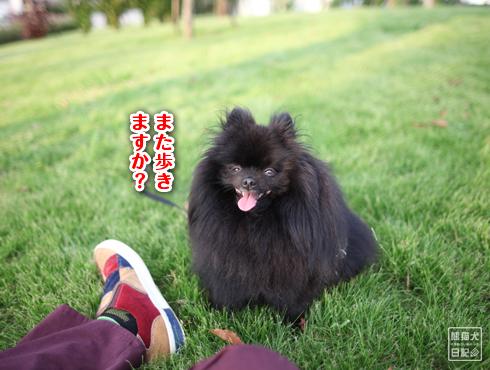 20151009_お台場10