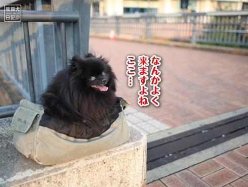 20151009_お台場13