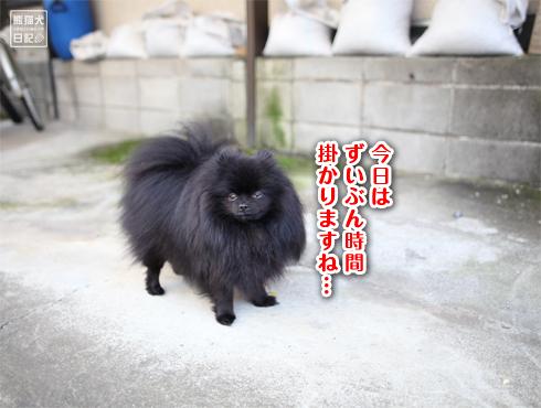 20151010_自宅ドッグラン10