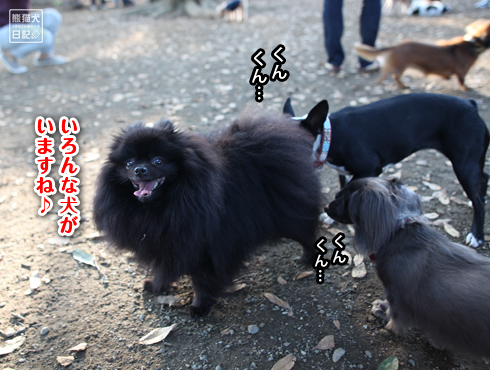 20151022_ドッグラン6