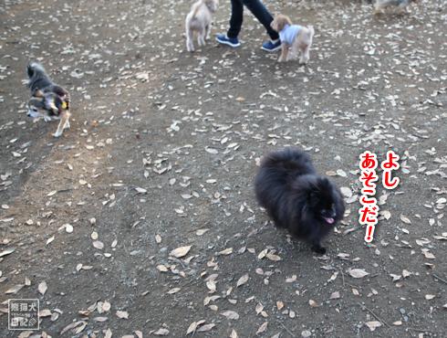 20151022_代々木公園5
