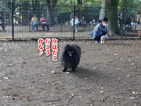 20151022_代々木公園4