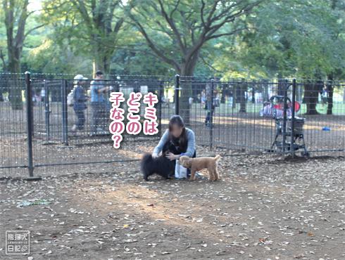 20151022_代々木公園3