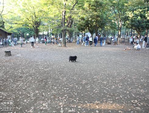 20151022_代々木公園2