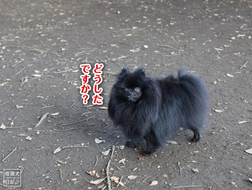 20151022_代々木公園7