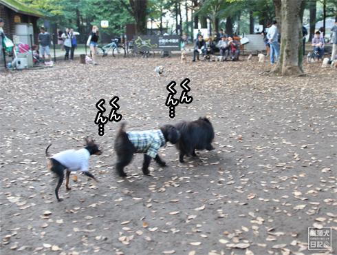 20151027_さよなら代々木公園6