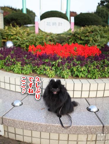20151102_大きな公園7